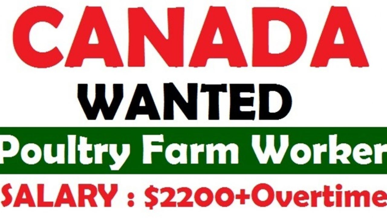 Poultry Farm Jobs In Canada Wanted In Poultry Farm Canada