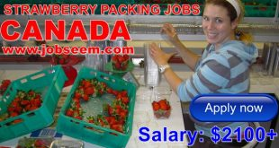 STRAWBERRY-Company-Jobs-in-CANADA-2017-Hiring-in-Fruit-Packing-JOBS-2018