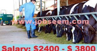 Dairy Farm Workers Wanted in New Zealand 2018 Apply Now Job