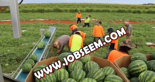 Agriculture and Farming Jobs Archives - Page 2 of 4 - Job Careers