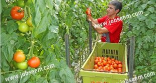 agriculture jobs in canada for foreigners Archives - Job Careers